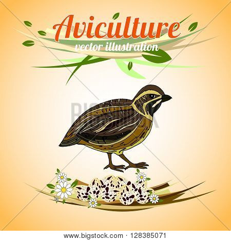 Quail with eggs. Poultry. Aviculture. Vector illustration.