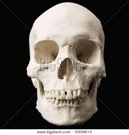 Menschlicher Schädel mit Zähnen auf schwarz.