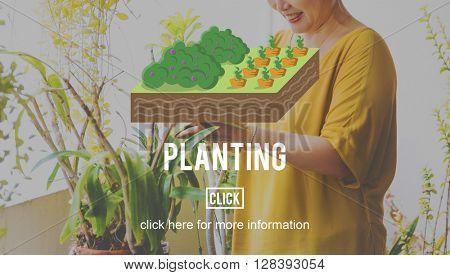 Plant Planting Agriculture Farm Farming Concept