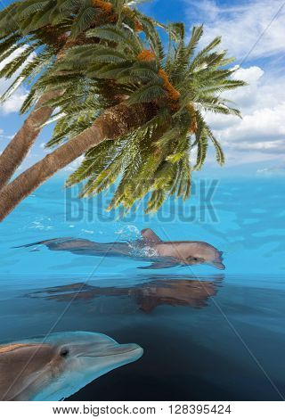 seascape with dolphins in turquoise sea  waters and palms