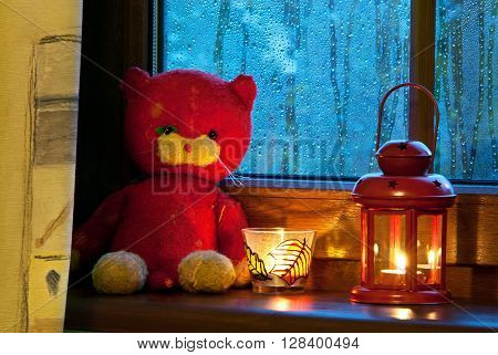 old plush tomcat is sitting by the window