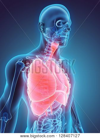 3D Illustration Of Respiratory System.