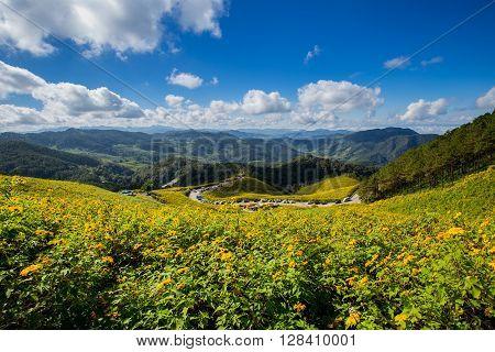 Tung Bua Tong Mexican Sunflower Field In Maehongson (mae Hong Son) Province At Thailand.