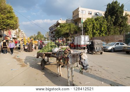 CAIRO, EGYPT - FEBRUARY 2, 2016: Donkey standing on street with vegetables cart.