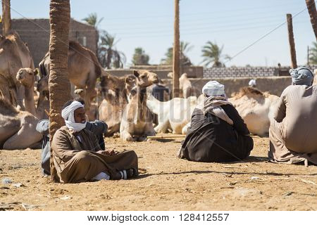 DARAW, EGYPT - FEBRUARY 6, 2016: Local camel salesmen on Camel market sitting on ground.