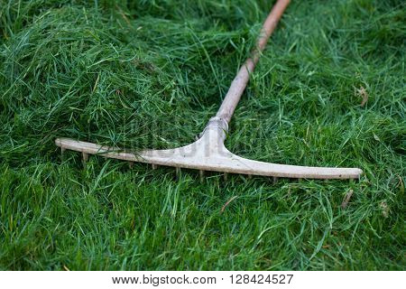 Rake lying on grass