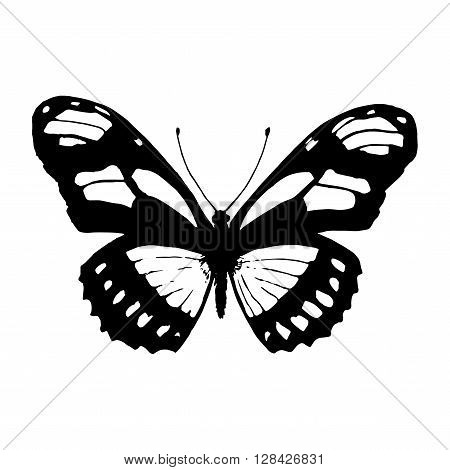 Vector butterfly. Black and white butterfly. Butterfly silhouette