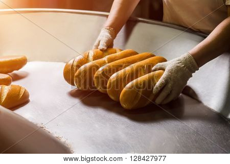 Stacking bread from conveyor on the shelves. Bakery job. Delivery of white bread. Manufacture of bakery products.