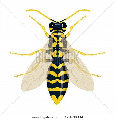 Wasp vector illustration isolated on a white background