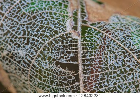 Texture With Rotten Leaves With Fibers