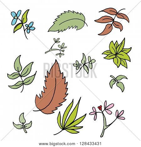An image of a set of leaf drawings.