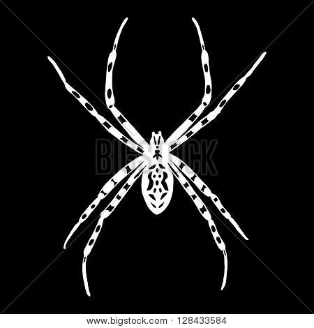 Vector illustration of black and white spider. Argiope bruennichi