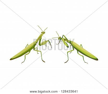 vector illustration of two praying mantis are fighting. Vector praying mantis. Symbol of martial arts