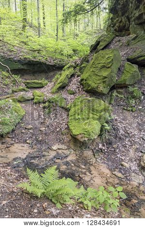 Rock ledges and mossy boulders surround a stream flowing through Pearl Ravine in Shades State Park Indiana.