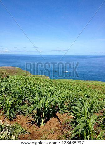 Corn Farming
