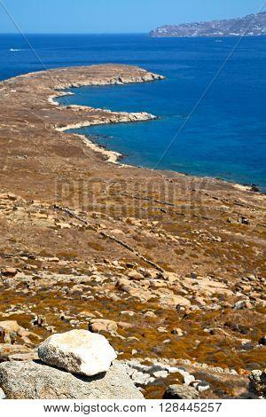 Bush   In Delos   The Historycal   Old Ruin Site
