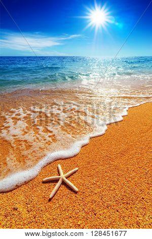 beautiful mediterranean seascape with starfish