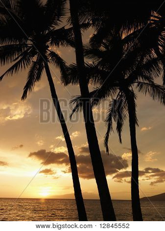 Sunset and palm trees by the Pacific Ocean in Maui Hawaii.