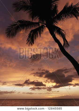 Sunset and palm tree by the Pacific Ocean in Maui Hawaii.