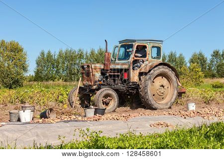 NOVGOROD RUSSIA - AUGUST 26 2015: Old wheeled tractor working at the potato field in summer sunny day