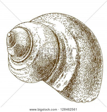 Vector antique engraving illustration of snail shell isolated on white background