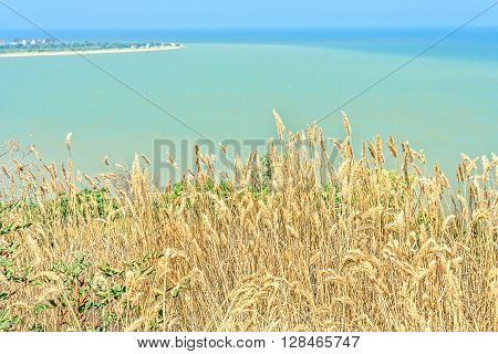 Dry yellow grass on the high bank of the turquoise sea close-up