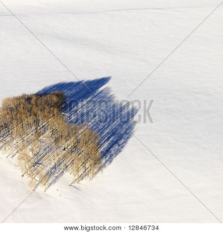 Aerial landscape of lone tree in snow, rural Colorado, United States
