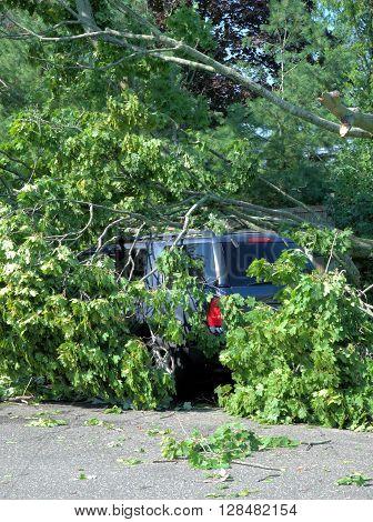 Wind Damage Fallen Tree on a SUV