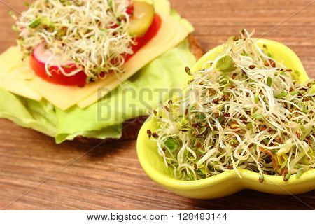 Green bowl with alfalfa and radish sprouts and freshly prepared vegetarian sandwich lying on wooden table concept of healthy lifestyle diet food and nutrition