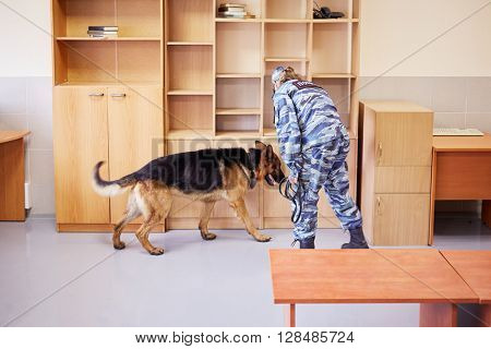 Policewoman works with shepherd in room.