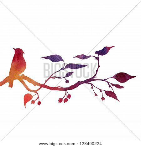 silhouette of bird at tree drawing in watercolor, hand drawn waxwing at branch of wild apple tree, hand drawn illustration