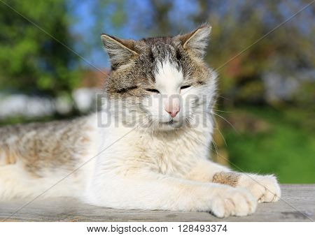 Funny cat rest outdoor at suny day