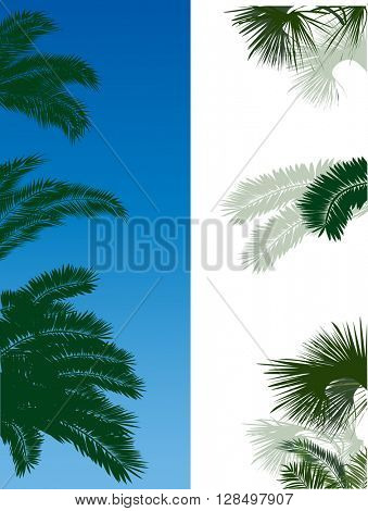 illustration with lush green palm tree foliage on white and blue background