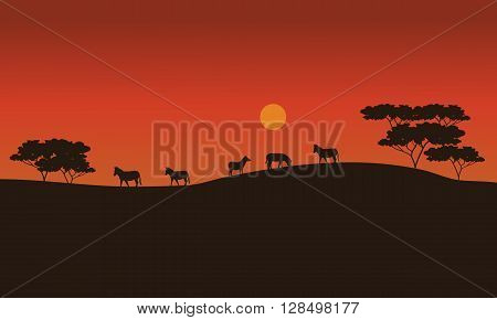 Zebras on savanna at sunset with orange backgrounds