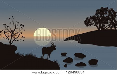 Antelope silhouette on the riverbank at the morning