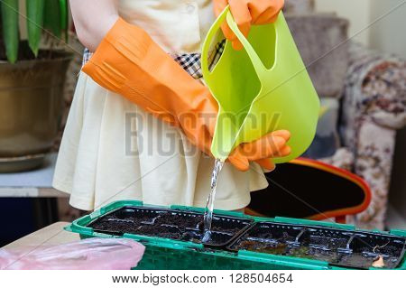 Girl in orange protective gloves pouring from green watering seedlings in a plastic tray