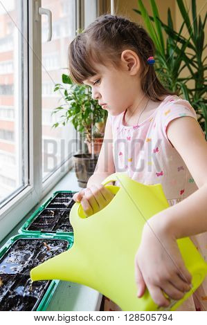 Girl in dress with butterflies intense watering of the green watering onions in the pan on the windowsill