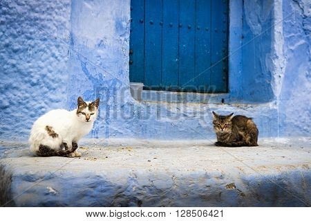 Two cats in front of a door in Chefchaouen Morocco.
