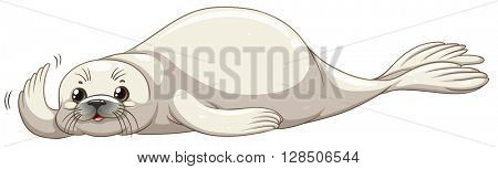 Seal with white skin illustration