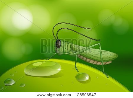 Grasshopper on green leaf illustration