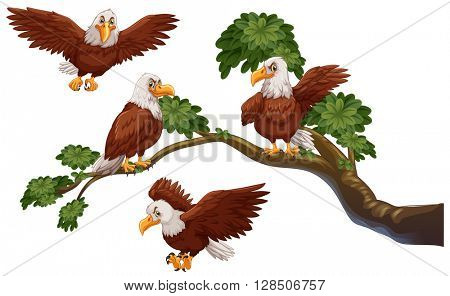 Four eagles on the branch illustration