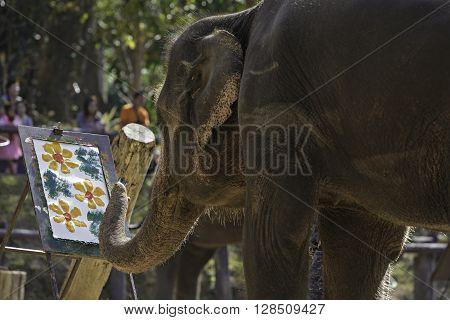 Chiang Mai, Thailand - January 11, 2016: Elaphant drawing a flowers paint. Elephant show at Mae-Sa Elephant Camp. Chiang Mai, Thailand