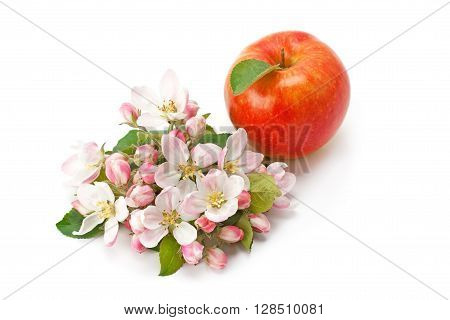 flowers flower buds and ripe apple isolated on white background