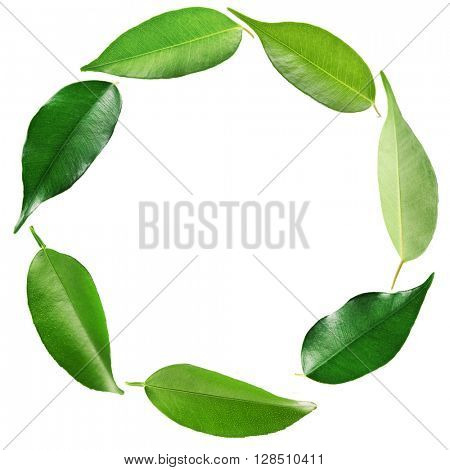 Green tea leaves shaped as round frame isolated on white