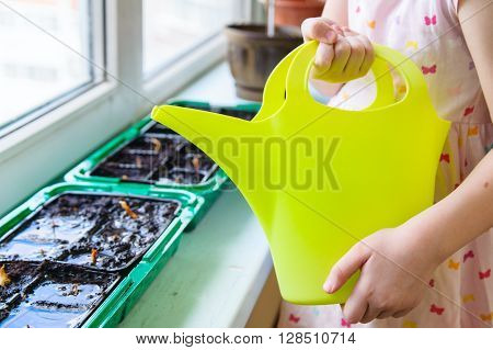 Girl holding a green watering can and just watered the seeds of onions in the pan on the windowsill