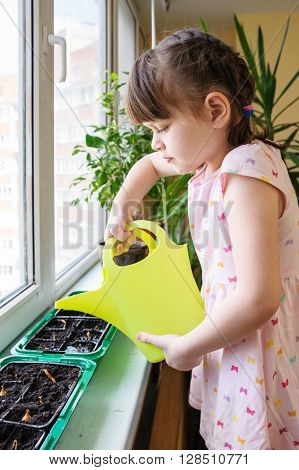 Girl with a pigtail and dress pouring from green watering onions in the pan on the windowsill