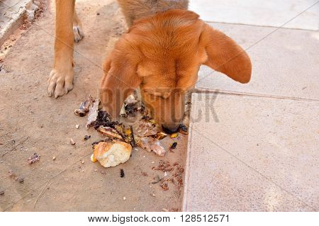 stray dog eating leftovers food at the street