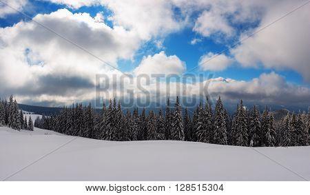 Fantastic winter landscape with snowy trees. Carpathians, Ukraine, Europe.