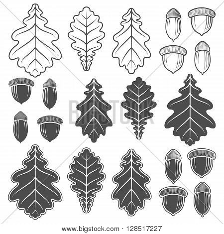 Vector acorns and oak leaves. Isolated objects on a white background.