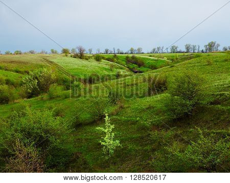 Small bright young tree on the hill with green meadow and ravines in the background